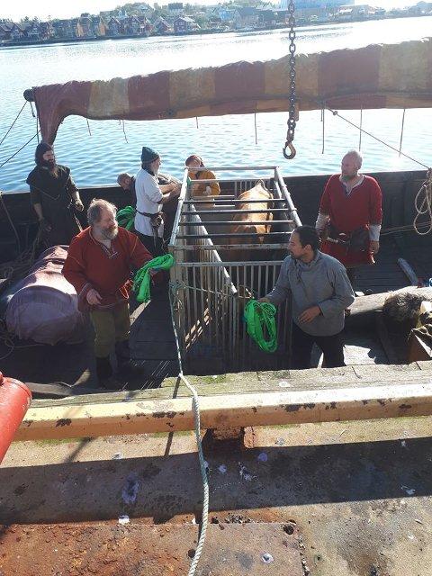 """MØNSTRET PÅ: Her er oksen mønstret på om bord på """"Lofotr"""". Høvding Terje Bøe til høyre."""