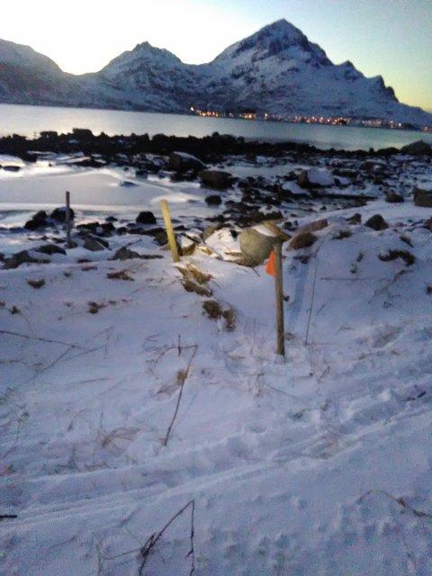 NAPPSTRAUMEN: Det var i dette området kadaveret ble funnet.