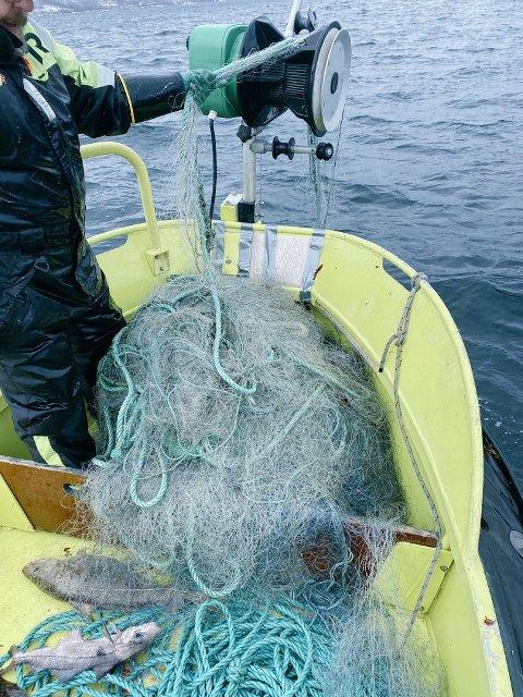 BESLAGLAGT: Her blir torskegarna beslaglagt