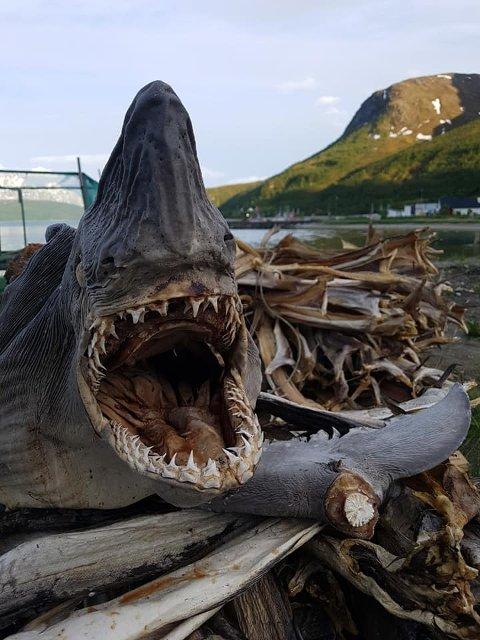PYNT: Denne skal opp på veggen i Tromsdalen.