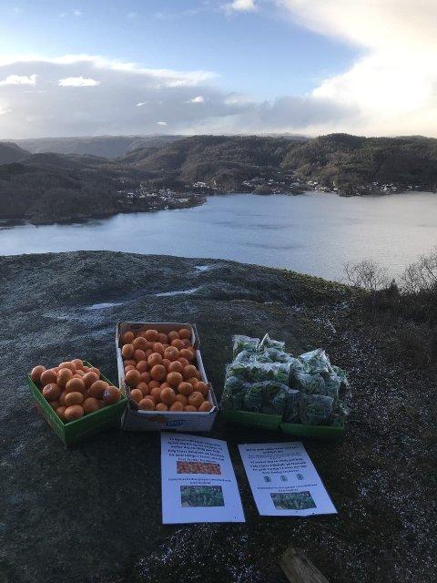 GODBIT: Denne helgen kan man hente klementiner og sukkererter på Kvidafjellet.