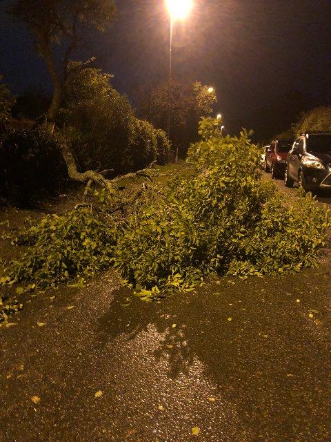 BLÅSTE OVER ENDE: Dette treet på Tronvik på Jeløy var var bare ett av mange som måtte gi tapt for den sterke vinden fredag.