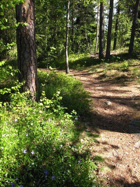 Trivelig skogssti på Midtåsen