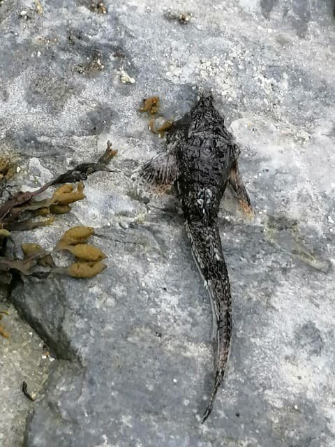 DISKUSJON: Mange har diskutert hvilken fiskeart dette er i gruppa  «Hjelp til nesten alt mulig i Tromsø». Nordlys har, ved hjelp av fiskeekspert på UiT, funnet svaret. Foto: Olai Møllebakken