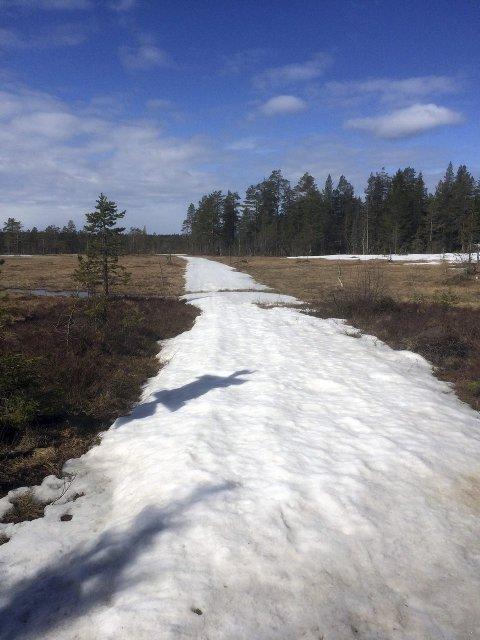 PAKKET SNØ: Snøen bærer selv om skisesongen er over FOTO: LISE LUNDBERG