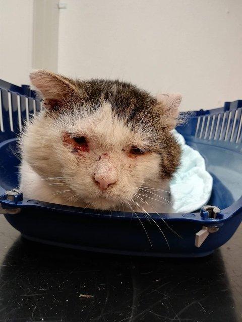 DYRETRAGEDIE: Den aidssyke katten Ragnar Lodbrok ble avlivet av veterinæren fordi den var så syk. Da hadde den vært hjemløs på Dokka i over to år.