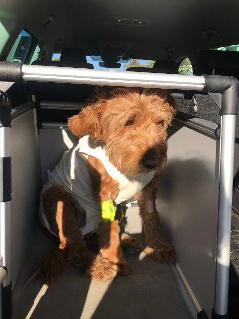 SISTE BILDET: Winnie er plassert i bilen og på vei til undersøkelse.