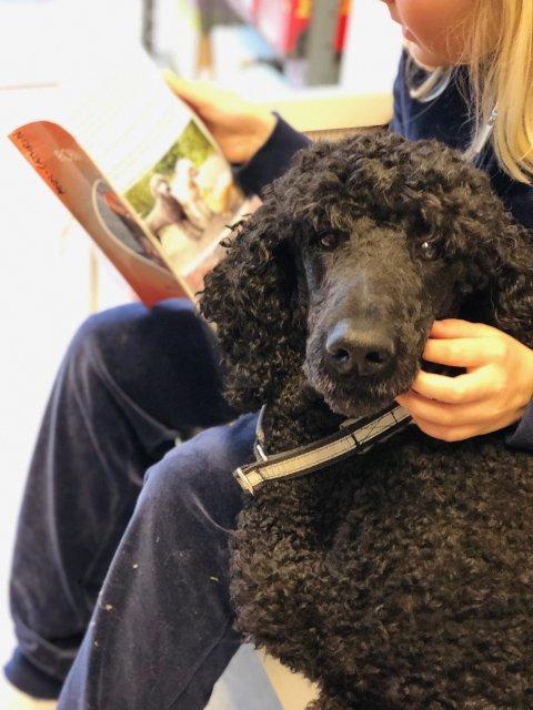 Hunden Echo (4) hjelper barn å finne leselysten. Bildet er tatt i sammenheng med lesehundprosjektet dannet av Dyrebar Omsorg og Dysleksi Norge.