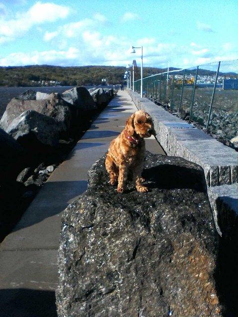 Coccapu'en Pippi slo seg til ro på steinen som trosset naturen.