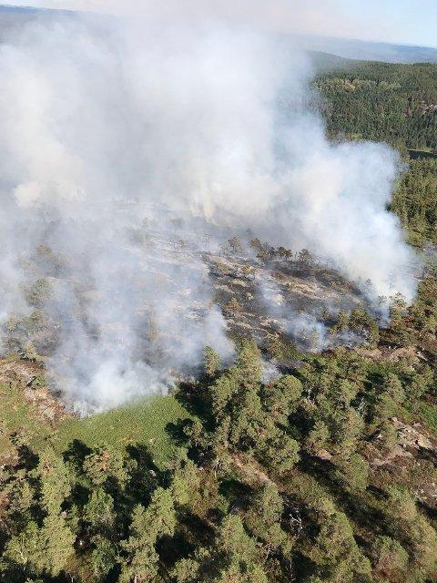 Skogbrann i Vrangvassheia i Gjerstad kommune i Aust-Agder i begynnelsen av august. Ekstreme temperaturer og tørke bidro til å øke skogbrannfaren i store deler av landet. Sverige ble i sommer rammet av det største skogbrannen i landet i moderne tid