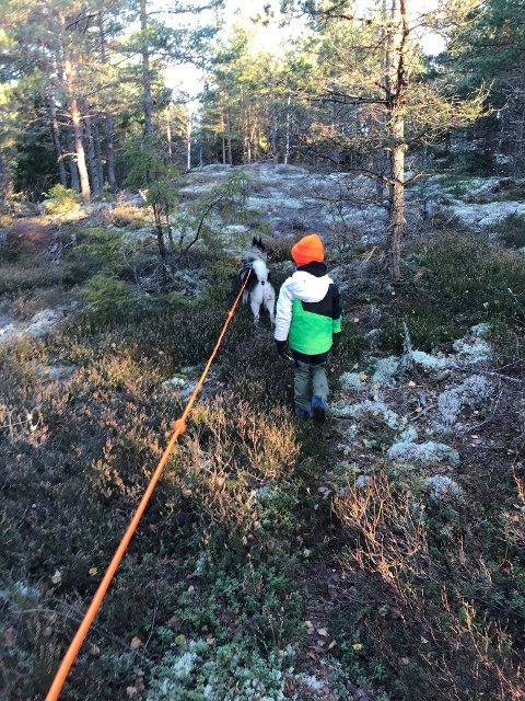 Søk: Odin Johannes Bøhn og Max håper å komme på sporet av elg i Solbrekke elglag.