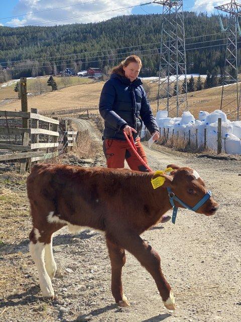 IKKE VÅRSLEPP: Kalven Pelle skulle vært på vårslepp 18. april. Det ble ikke noe av. Han måtte nøye seg med en tur ut i vårsola sammen med matmor Sara.