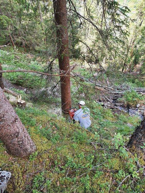 RYDDING: Torgeir Urdal og venner ryddet videre på ski traseen i Såheimslia.