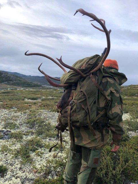 TUNGT LØFT: Etter en hel dag på jakt etter den ideelle skuddsituasjonen trykket Øyvind Tangstad på avtrykkeren, og reinen gikk i lyngen.