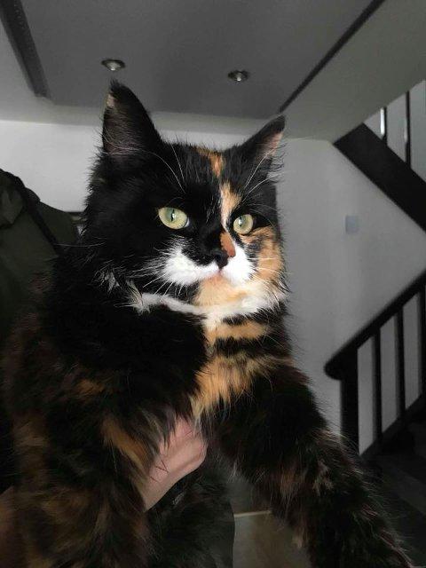 AVKLIPT: Katten Luna var ikke seg selv etter at noen hadde klipt av værhårene hennes. I 24 timer lå hun stille innendørs.