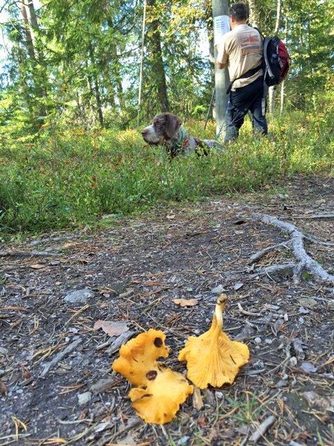 FAGST: Turen opp og ned ble av mange brukt til piknikstopp, sopp- og bærplukking.