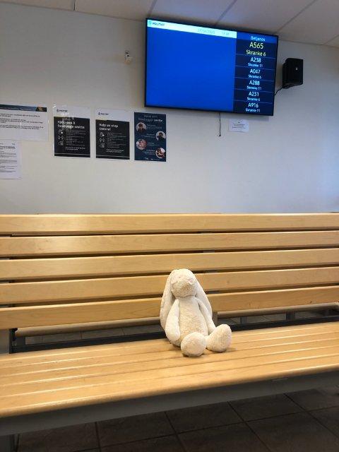 Den gjenglemte kaninen har ventet tålmodig siden torsdag.