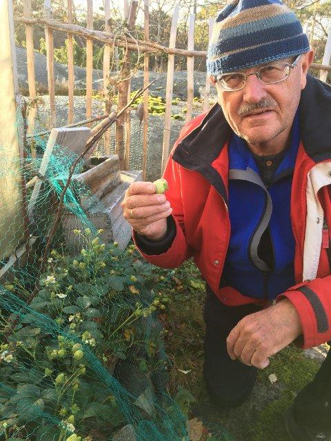 KAN BLI FESTMÅLTID: Knut Harald Johansen viser frem noen av de mange jordbærene på Papper.