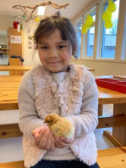 FIKK HILSE: 1.klasse-elev Jessica Rynning var en av få elever som fikk være vitne til klekkingen av kyllingeggene denne uka.