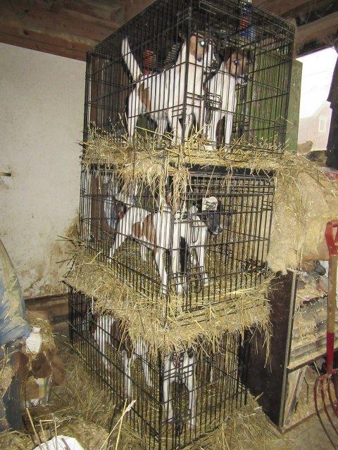 SMÅ BUR: Mattilsynet mener det ikke er forsvarlig å ha hunder i så små bur stablet på denne måten. Bildet er fra oktober 2015. Bonden har etter dette redusert hundeholdet betraktelig, og oppbevarer ikke lenger hundene i slike bur.