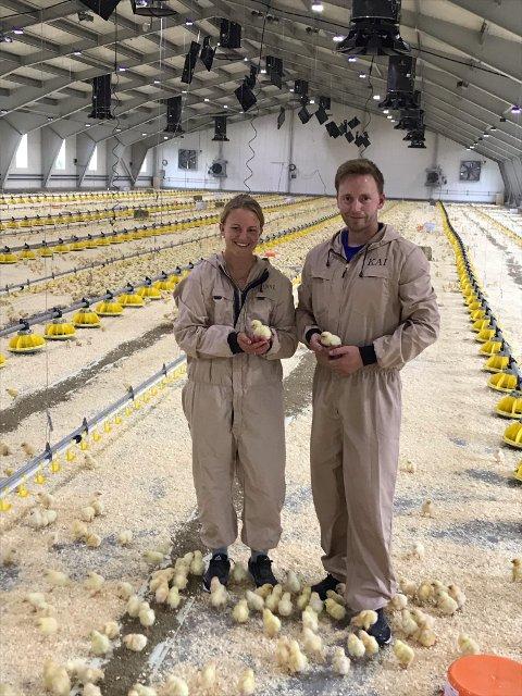 - Vi kom i mål, sier Marianne Hoås Moxness og Kai Emil Moxness, som torsdag 19. august fikk levert ca. 42.000 kyllinger. 28.000 av dem skulle i det nye fjøset deres.
