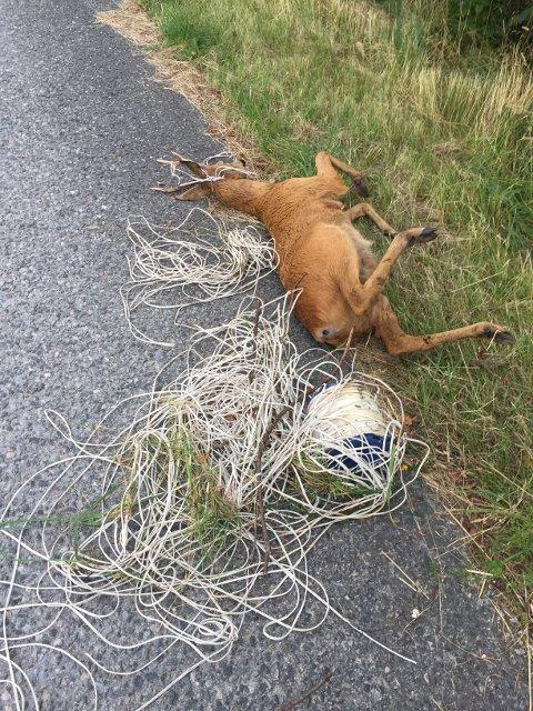 TRAGEDIE: Søppel som blir liggende i naturen, kan bli dødsfeller for dyr.