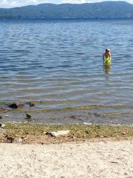 NÆRKONTAKT: Etter å ha badet i samme vann som disse endene i forkant av bildet, kom kløen for seksåringen.
