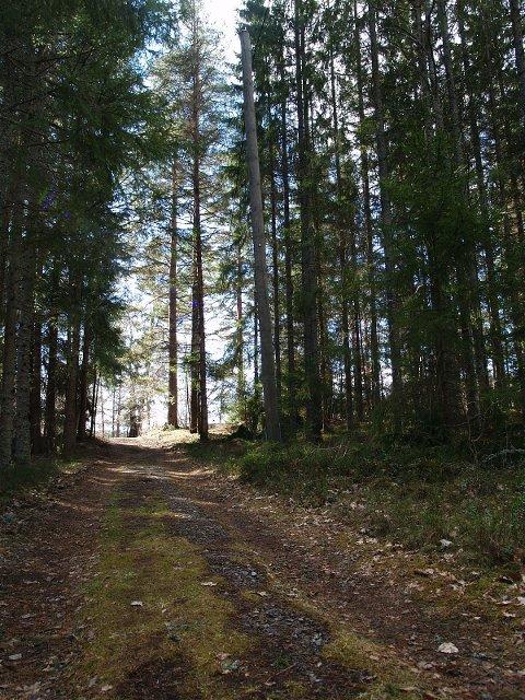MINNER: Skogen rundt hytta var vår lekeplass da jeg var yngre, minnes Lise Weidermann. I voksen alder har hun kunnet kjøpe barndommsminnene tilbake