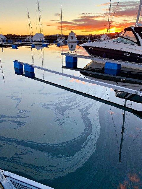 OLJEFILM: Slik ser det ut i båthavna ved Sjøsenteret på Vallø søndag.