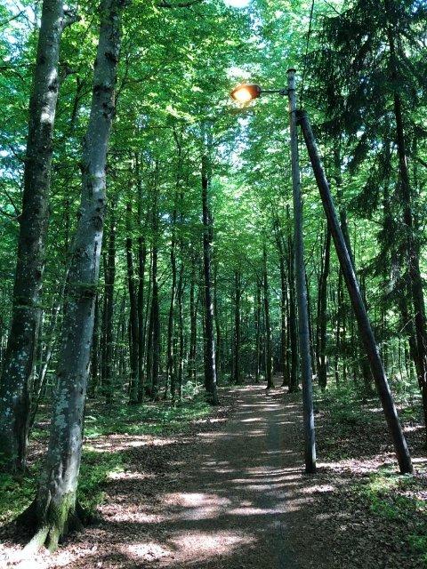 LYS MIDT PÅ DAGEN: lysene i lysløypa i Teieskogen står på selv om det er lyst ute.