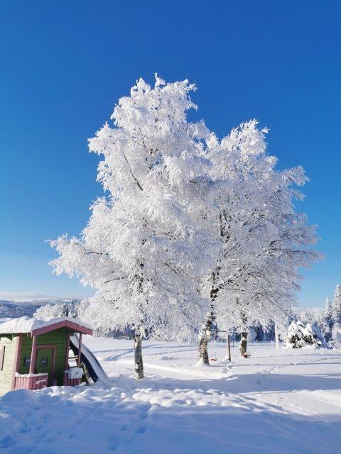 VINTERLAND: Verdalsbygda har stått for en fin og hvit vinter.