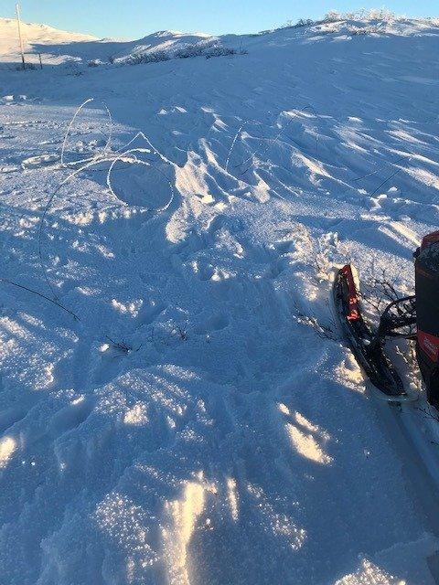 SNUBLETRÅD:  Her har telefonlinja mellom fjellgårdene i Snåsa falt ned på bakken.