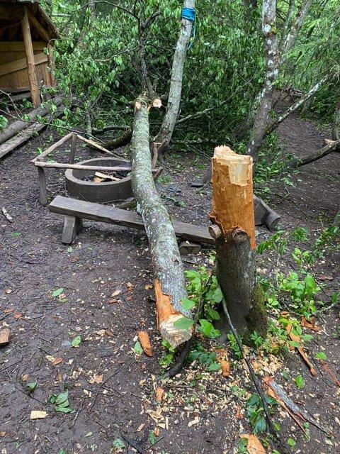 SKADEVERK: Flere trær har blitt hugget ned, trolig med øks i Geitespranget naturbarnehages uteområde.