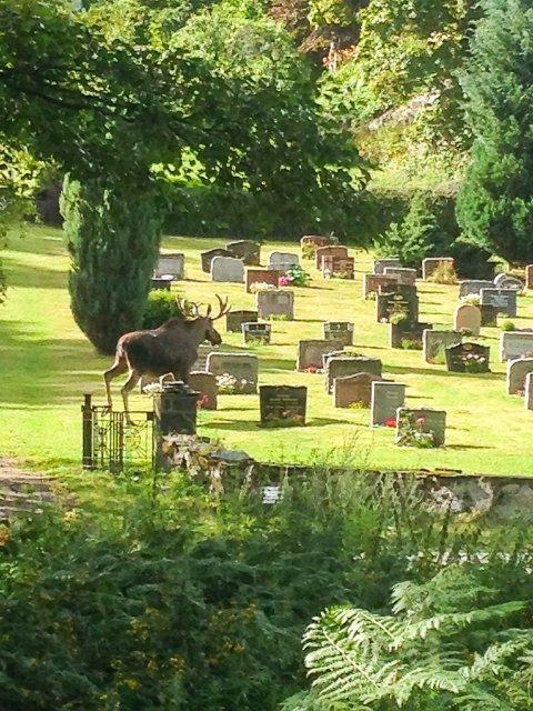 Elgen valgte retrett via Dypvåg kirkegård.