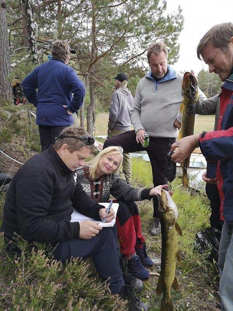 Innrapportering: De 26 gjeddene som var årets fangst under gjeddefestivalen ble veid og registrert. Rekorden på over 8 kilo (Elling Marcussen) ble ikke slått i år.   Foto: Privat