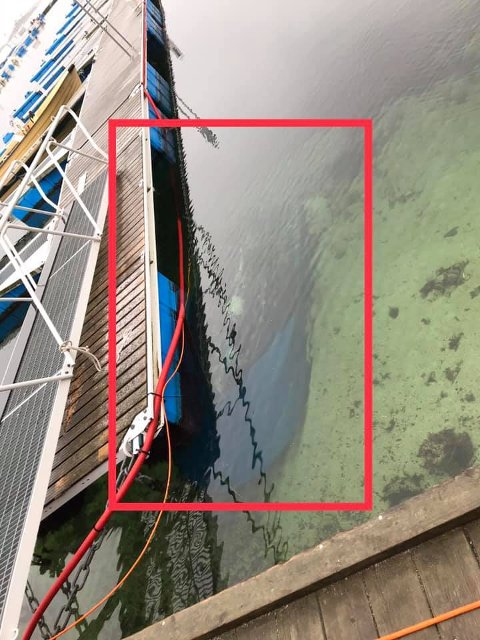 Flere har lagt merke til denne båten, som ligger godt under vannskorpa ved Hagefjordbrygga.