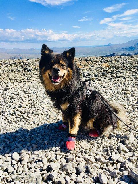 Nødvendig: Oliver fikk på seg potesokker på toppen av Besseggen etter å ha blitt sårbeint på veg opp.