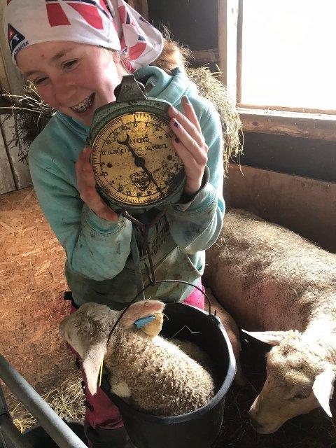 Gøy å hjelpe: Katrine synes det er gøy å hjelpe til i lamminga.