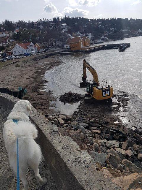 RYDDER STRANDA: En turgåer har delt flere bilder av strandryddingen som nå pågår i Hvitsten.