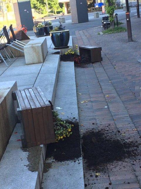HÆRVERK: Natt til mandag har alle blomsterkassene på Torget i Hokksund blitt veltet. Kommunen oppdaget dette i dag tidlig, men vet ikke hvem som står bak. Hokksund Blomsterparlament er skuffet over hendelsen, og sier til Drammens Tidende at det vil koste dem mye ekstra arbeid.