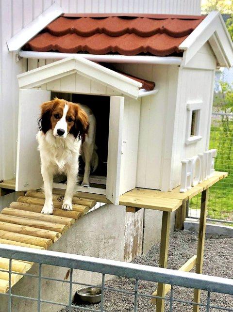 På Torød skole har de en medarbeider med nesten fast jobb og egen bolig, og det er hunden Fox. I Astma- og allergiforbundet er de skeptiske.