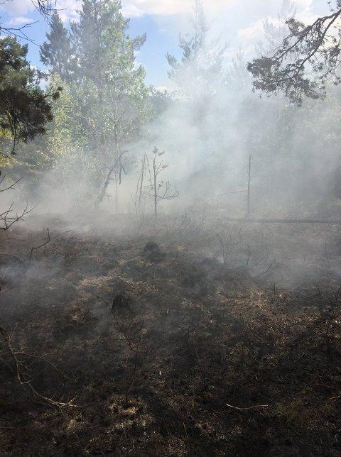 – Av erfaring vet vi at skogbranner etter lynnedslag kan blusse opp etter flere timer – noen ganger dager. Vi ber derfor våre innbyggere om å følge med, oppfordrer VIB.