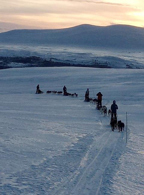 Livet i fjellet bak et hundespann.