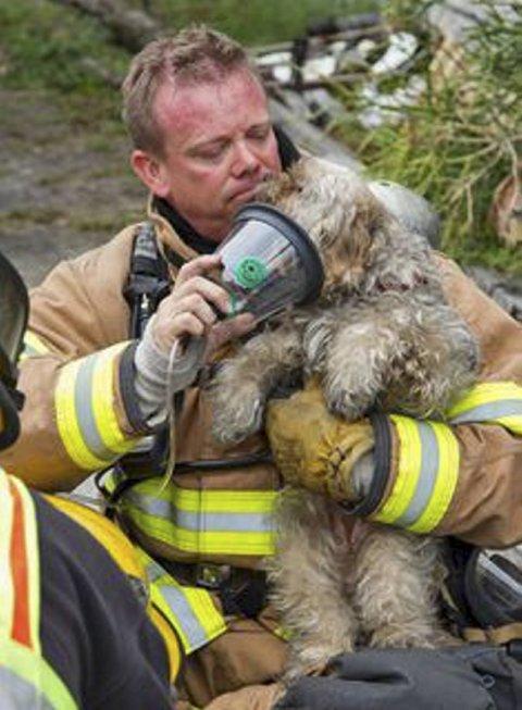 Dyrelivet lider i Australia, og hele verden ønsker å bidra med hjelp. Her en brannmann som gir oksygen til en liten hjelpeløs skapning.