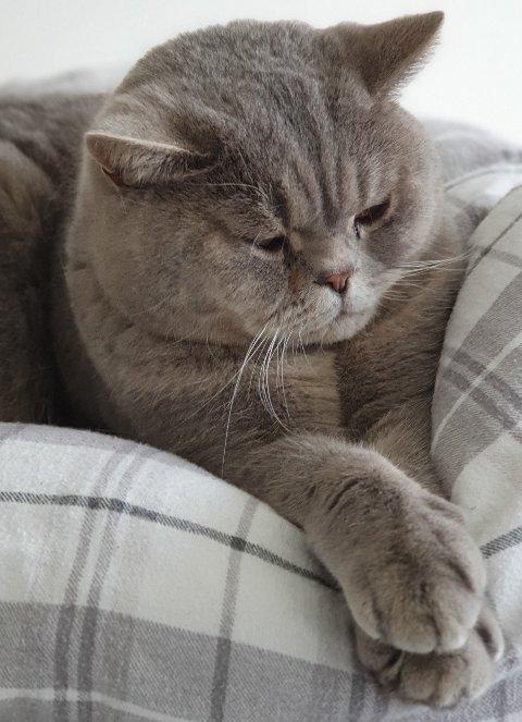 SAVNET: Katten Cæsar.