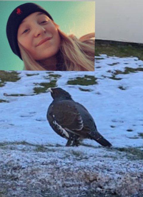 MØTTE TIUR: Hedda Børdalen-Elstad møtte en tiur på vei hjem fra skolen.