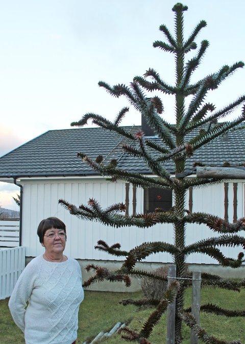 – Jeg fikk lyst til å se om det kunne vokse i Sandnessjøen, forteller Oddrun Horsgård. 17 år seinere rager treet atskillig høyere enn eieren.