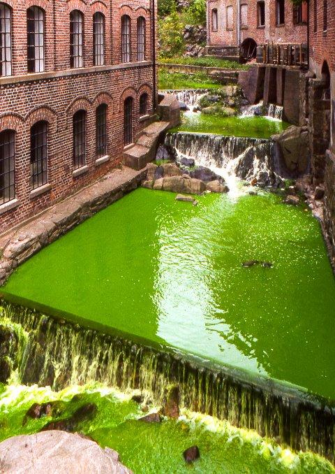 MOMENTUM: Kunstneren Olafur Eliasson farget Mosse-elva grønn under åpningen av den første Momentumutstillingen i 1998.
