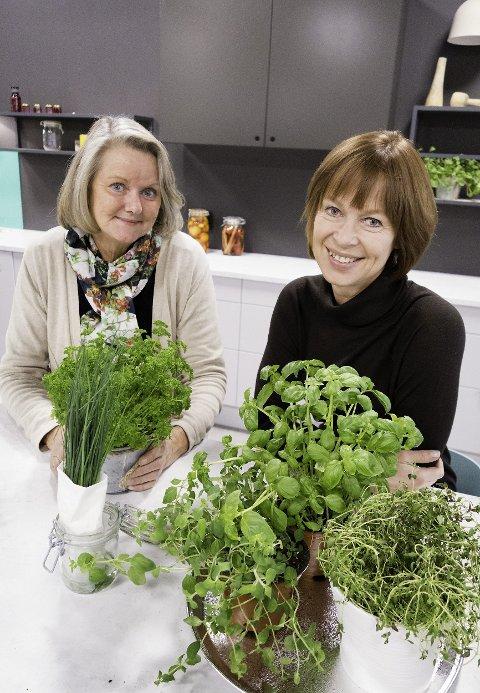 GIR URTETIPS: Ulike krydderplanter har ulike behov, forklarer Gerd Byermoen (til høyre) og Toril Gulbrandsen.