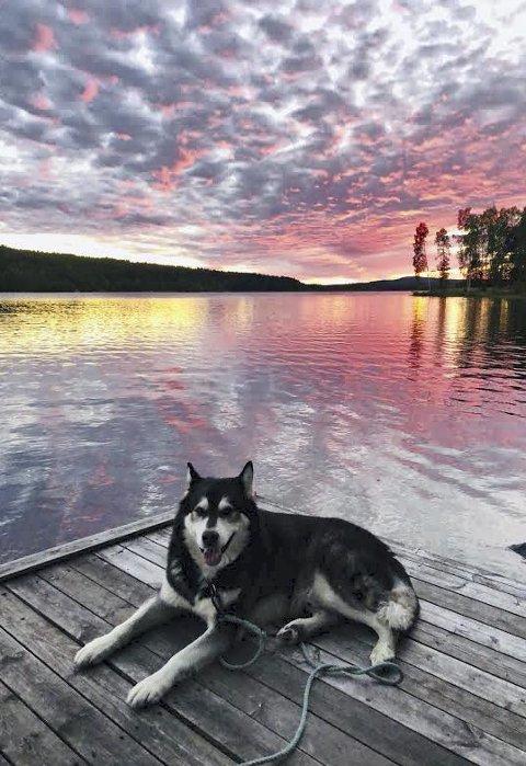 Rago: Koser seg ved Frysjøen. Foto: Lill Gro Gulløy.